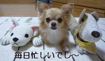 blog2012091803.jpg