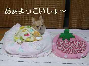blog2012092403.jpg