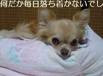 blog2012092604.jpg