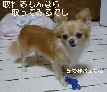 blog2012092905.jpg