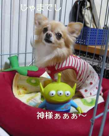 blog2012100202.jpg