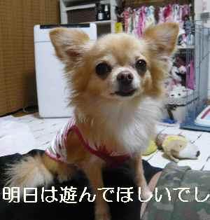 blog2012100403.jpg