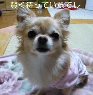 blog2013112705.jpg