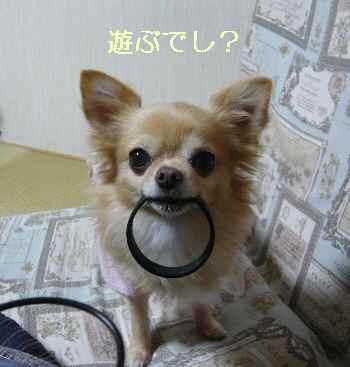 blog2013112804.jpg
