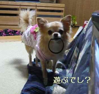 blog2013112805.jpg