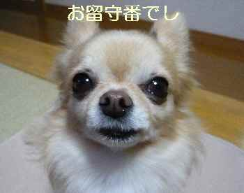 blog2013120805.jpg