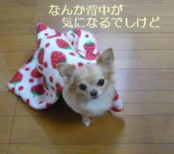 blog2013120901.jpg