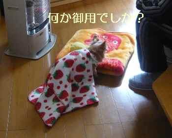 blog2013120904.jpg