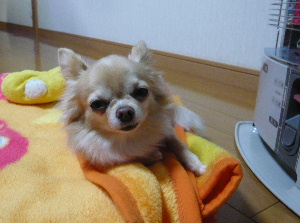 blog2013121204.jpg
