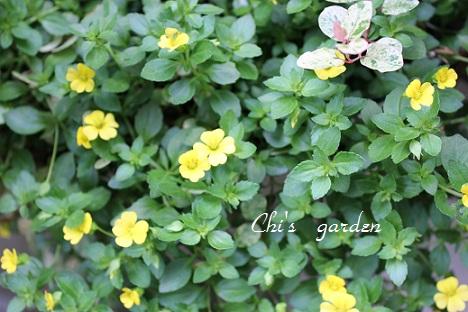 黄色い花(全体)