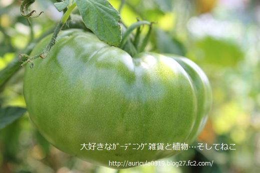 黒トマト3