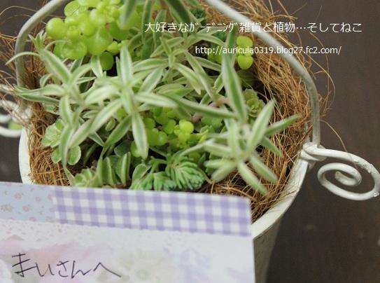 hiroroさんからのセダム(お手紙)