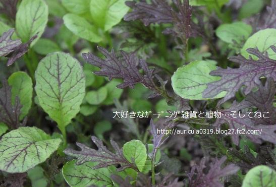 ぎゅうぎゅうと野菜たち