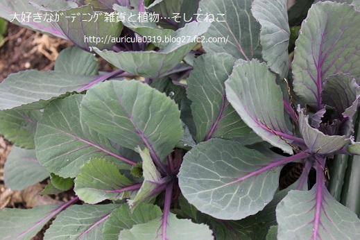 年越し紫キャベツ