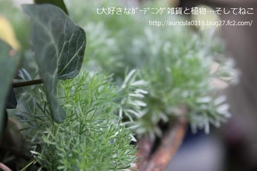 寄せ植えのコツラ