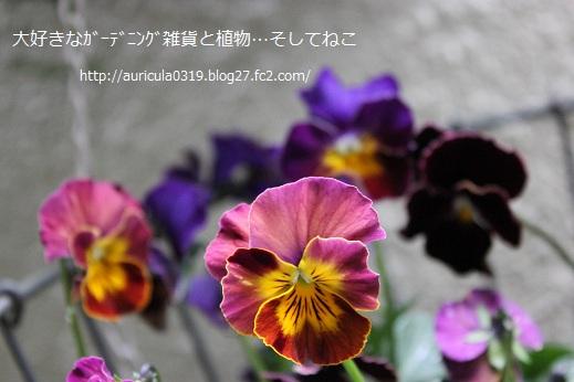 横浜セレクション(お気に入り)
