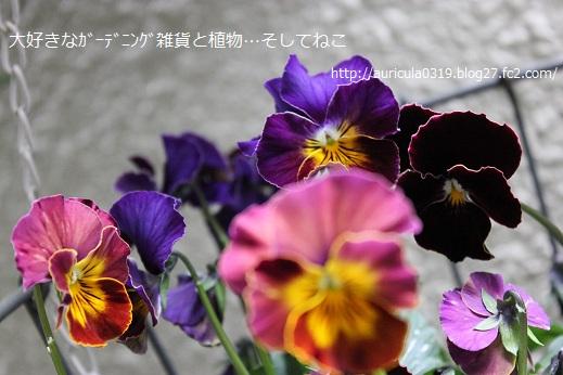 横浜セレクション(お気に入り)2