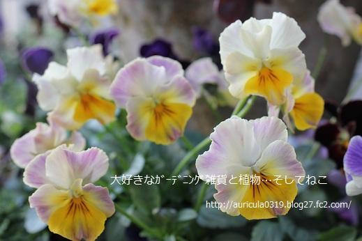 花まつり(ネズミ額庭)
