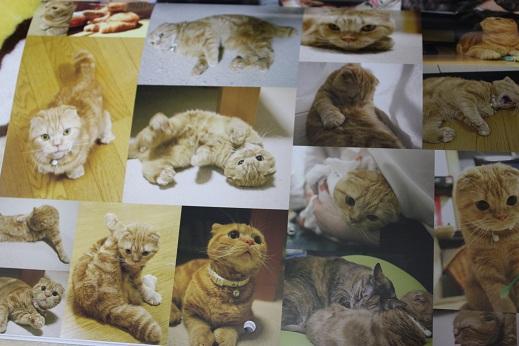 純情仔猫物語カレンダー(国ちゃん)