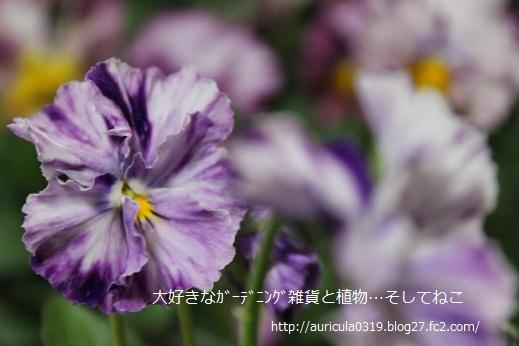 花まつり3