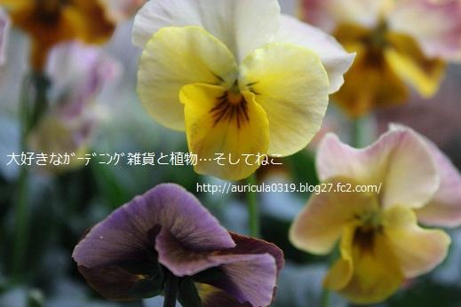 花まつり・イエロー系2
