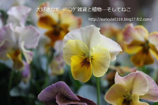 花まつり・イエロー系1
