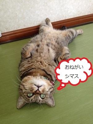 yaya_blog.jpg