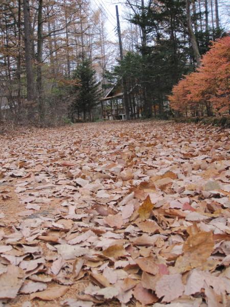 漂う枯葉の匂い