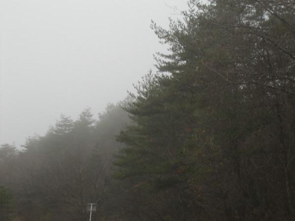 霧に煙る木々