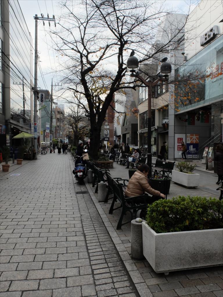 遊歩道沿い_3