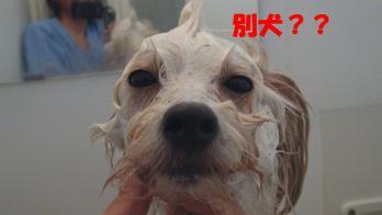 s-お風呂3