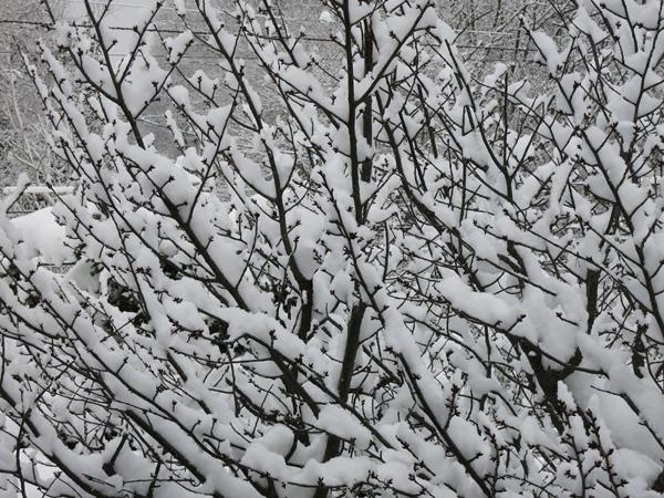 2014 大雪の朝
