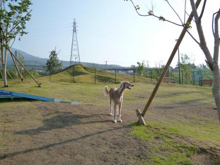 2012-06-04 イアンに会いに犬山 016s