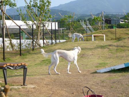 2012-06-04 イアンに会いに犬山 019s