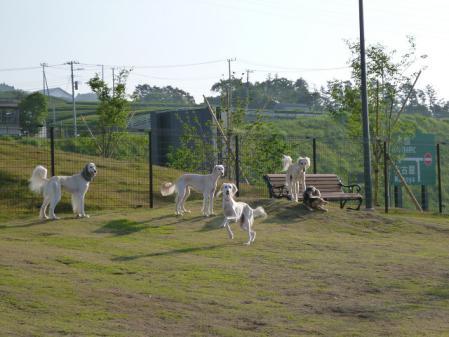 2012-06-04 イアンに会いに犬山 022s
