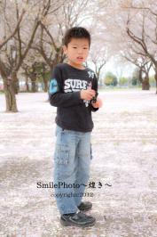 IMG_3564桜散るのコピー