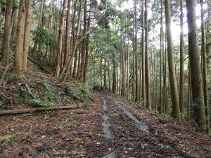 20121223kamogawa13.jpg