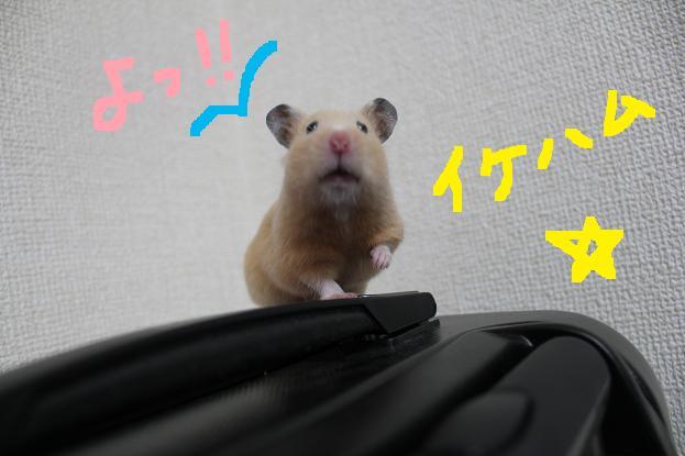 ぱちぱち!