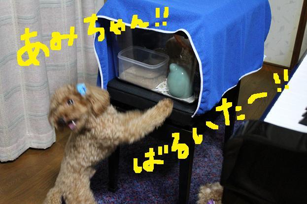 きゃんきゃんきゃん!