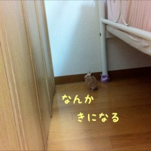 $キンクマ☆バルブログ