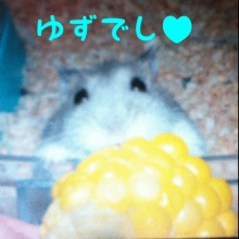 キンクマ☆バルブログ