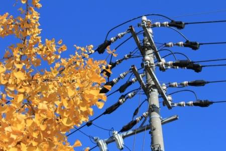 銀杏と電柱。_800