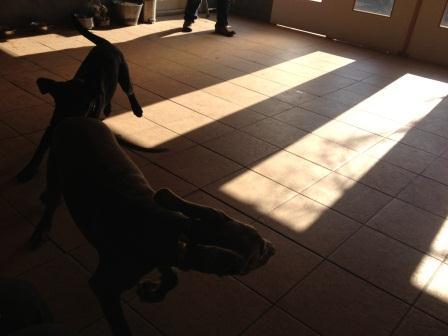 puppyparty11241.jpg