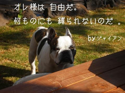 PICT0064_20130416003133.jpg