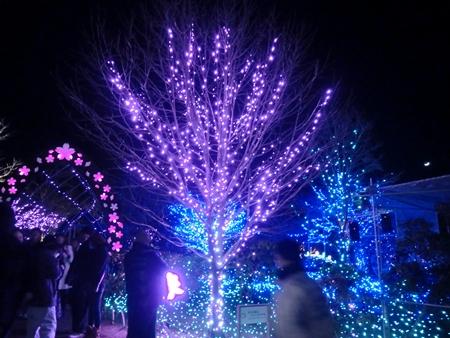 12_20121218114150.jpg