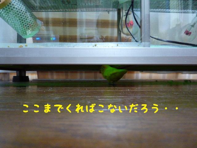 P1250793.jpg