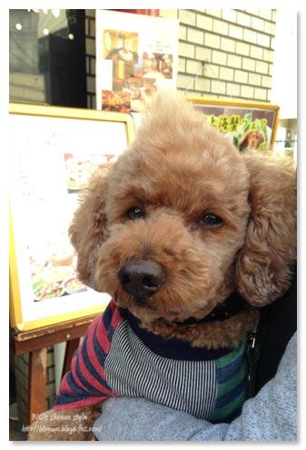 中華街,犬