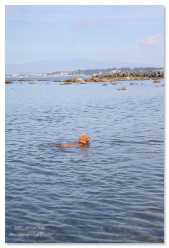 スイミング,水泳