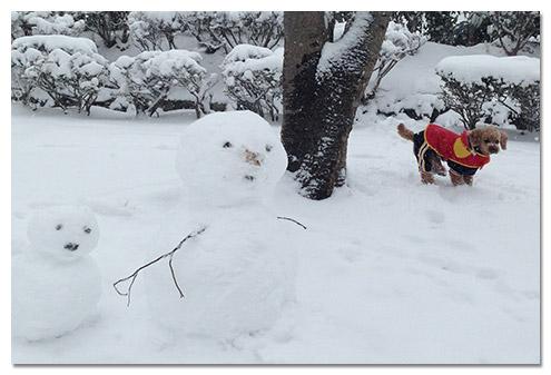 逗子,大雪