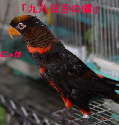 10_ピンナ
